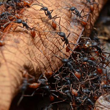 Tegen mieren, vliegen en wespen