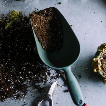 Potgronden / bodembedekkers